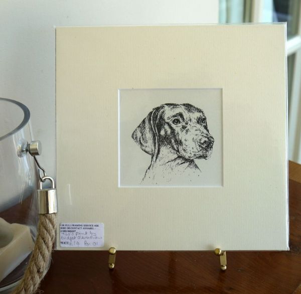 German short haired Pointer - head - Poi O1 -1960's print by Bridget Olerenshaw